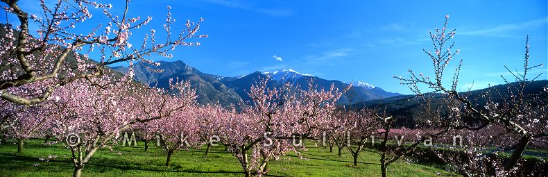Springtime in the Pyrenees - Prades, France